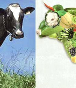 I consumi di carne: la territorialità è una garanzia