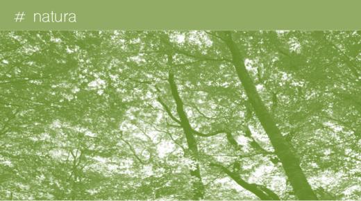 Alla ricerca del verde perduto